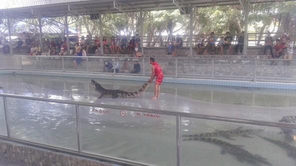 Krokodillifarm