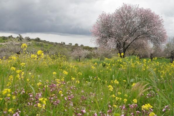 Õitsev Küpros