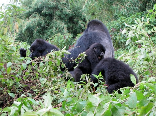 Rwanda ahvipere